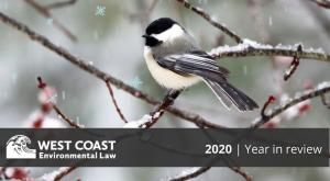2020 Year in Review (Image: Black-capped chickadee on branch)